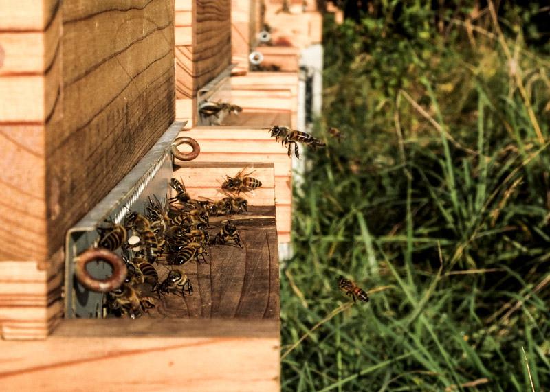 Photo décorative d'abeilles et de ruches