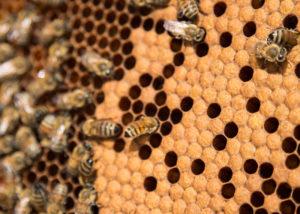 Photo décorative d'abeilles et d'alvéoles