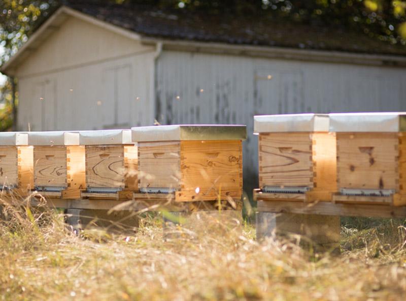 Photo de ruches